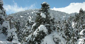 El Gobierno aprueba la propuesta inicial para que la Sierra de las Nieves sea declarada Parque Nacional